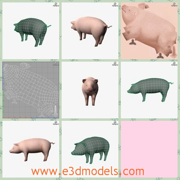 3d model a fat but cute pig - This is a 3d model about a sow pig,which is fat but lovely and its legs are short, so is its tail.