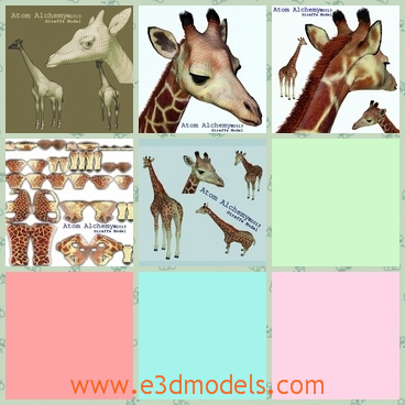 3d model a giraffe with enlarged eyes - This is a 3d model about a giraffe with cut and large eyes.The giraffe has long neck and four feet,and the fur is so special.
