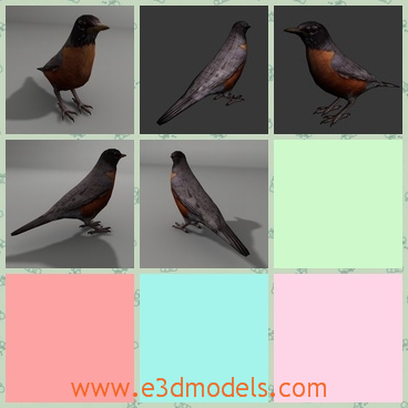 3d model the bird of robin - This is a 3d model of the bird of robin,which looks just like the other birds.The model is cute and the bird has a long tail.