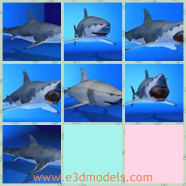 3d model the great shark - This is a 3d model of the great shark,which is white and has a big and horrible mouth.THe model is large and fat.
