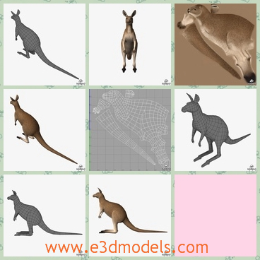 3d model the kangaroo with a long tail - This is a 3d model of a kangaroo with a long tail,and the pocket of the body seems disappear.