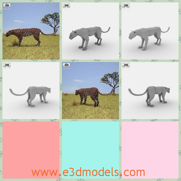 3d model the leopard - This is a 3d model of the leopard,which is large and dangerous to near.The model is is provided combined, all main parts are presented as separate parts therefore materials of objects are easy to be modified or removed .