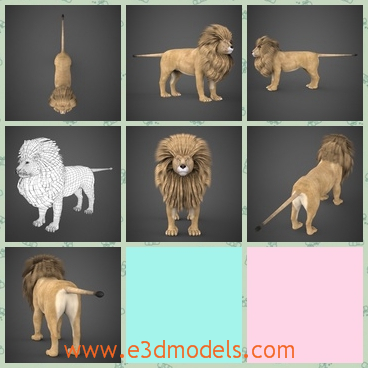 3d model the lion with heavy hair - This is a 3d model of the lion with heavy hair,which is large and dangerous to get near.The animal is a male lion.