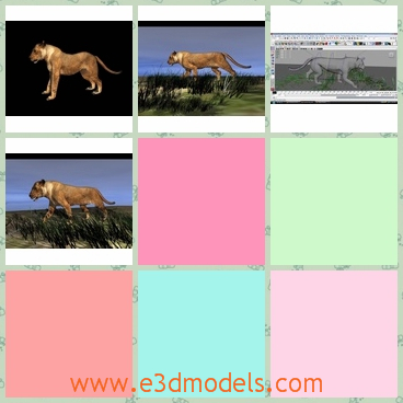 3d model the lioness - This is a 3d model about the lioness,which is strong and pretty.The lioness is alone and searching for the food.