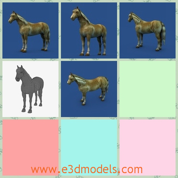 3d model the stallion horse - This is a 3d model of the stallion horse,which is a kind of adult horse.The horse is strong and big.