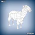 3d model of sheep base mesh