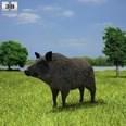 3d model the boar