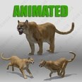 3d model the lion