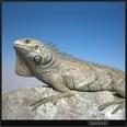 3d model the lizard