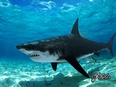 3d model the white shark with horrible teeth