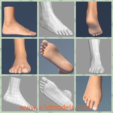 3d model the female foot - This is a 3d model of the female foot,which is the ankle of the female and the foot is big and smooth.The shape of the foot is fine and clean.