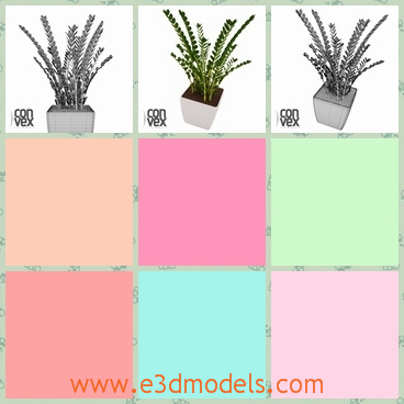 3d model of a potted plant - Here we have a 3d model that shows us a queer plant growing in a white cubic pot. This plant has tiny narrow leaves and long stems.