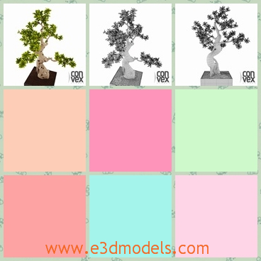 3d model of a potted tree - This 3d model is about a very shapely tree which grows in an oblong pot.This tree has rough white trunk and sharp thin leaves.