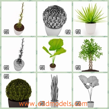 3d model of green plants - These are highly detailed 3d models of potted plants which are useful to decorate the interior of a house as well as to create a fancy garden.