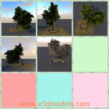 3d model the bended tree - This is a 3d model of the bended tree,which is big and green.The tree experienced a heavy storm before, and then forms the current shape.