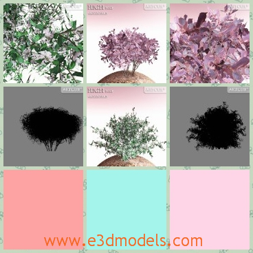 3d model the collection of the shrubs - This is a 3d model of the shrubs with several colors,which is flowering right now.The model is pretty in the wild.