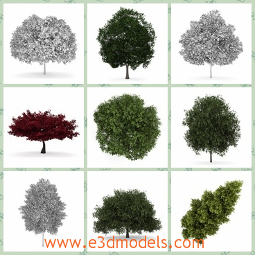 3d model the collection of trees - This is a 3d model of the collection of trees,which is tall and green.The tree is growing in summer.