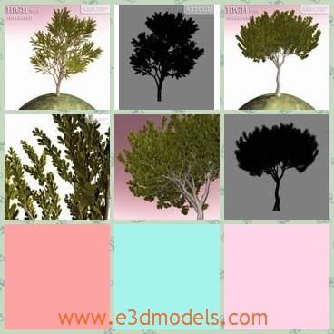3d model the collection of trees - This is a 3d model of the collection of trees,whica are carefully planted on the ground.