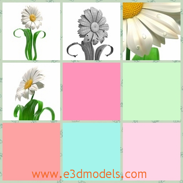 3d model the daisy flower - This is a 3d model of the daisy flower,which is the plant in the field.The The model can be subdivided into your needs.