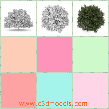 3d model the deciduous tree of oak - This is a 3d model of the deciduous tree of oak,which is the English type.The model is the most popular one in the country.