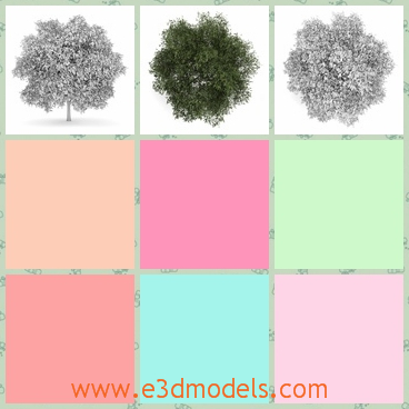 3d model the English oak tree - This is a 3dmodel of the English oak tree,which is made with details and textures.