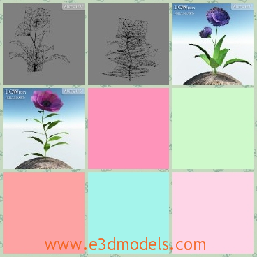 3d model the flower in purple - This is a 3d model of the purple flowers,which is flowering and the leaves are green and pretty.