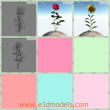 3d model the flowering flower - This is a 3d model of the flowering flower in the garden,which is standin steight and pretty.