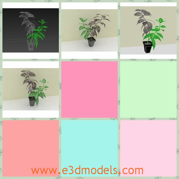 3d model the houseplant - This is a 3d model of the houseplant,which is planted in a pot.The leaves of the plant is fine and charming.
