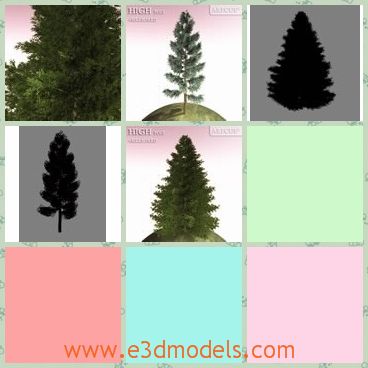 3d model the pine tree - This is a 3d model of the pine tree,which is planted on a corner of a hill.The model is small but strong.