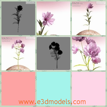 3d model the purple flower - This is a 3d model of the purplw flower,which looks special and beautiful.The model can be used as the decorations in the house.