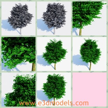 3d model the realistic tree - This is a 3dmodel of the realistic tree,which will not give you any problems during usage because I know you can