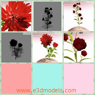 3d model the red flower - This is a 3d model of the red flower with leaves,which is flowering and ready to moved to the other places.