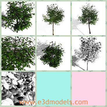 3d model the simple tree - This is a 3d model of the simple tree,which is made based on the real ones.The green leaves are flourish and charming.