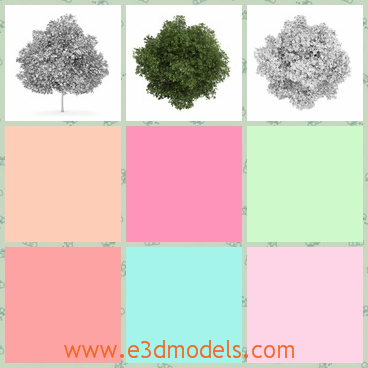 3d model the small leaves - This is a 3d model of the small leaves,which is charming and great.The tree is common on the earth.3