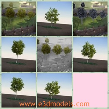 3d model the tree - This is a 3d model of the tree,which is small and growing in summer.All parts have real names for easy navigation in scene.
