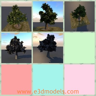 3d model the tree - This is a 3d model of the tree in green,which is flourish and big.The truck of the tree is thick and can be used to construct houses.