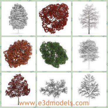 3d model the tree collection - This is a 3d model of the tree collection,which is a collection containing 30 highly detailed 3D models of trees.
