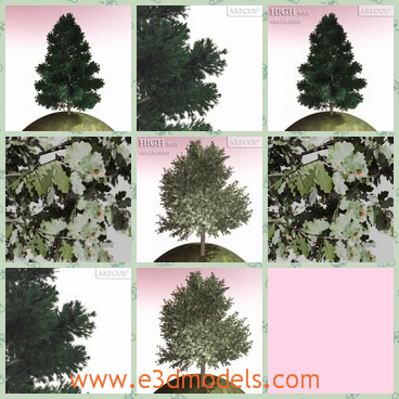 3d model the tree-pine - This is a 3d model of the tree on the planet,which is blooming and green.The model is high and big.