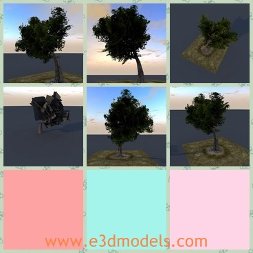 3d model the tree with a big head - This is a 3d model of the tree with a big head,which is big and flourished on the top.The model is textured and ready to be used in construction.