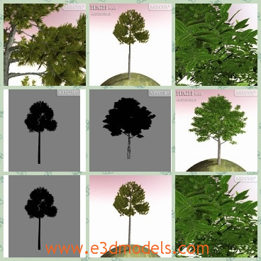 3d model the tree with foliage - This is a 3d model of the tree with foliage,which is green and pretty.The model is tall and thin.