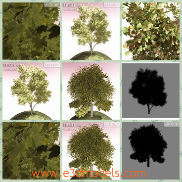 3d model the tree with heavy leaves - This is a 3d model of the tree with heavy leaves,which are planted in the garden and other places.