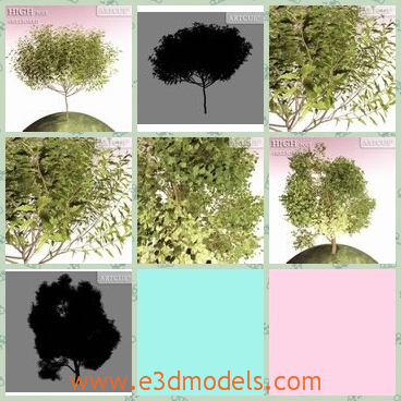 3d model the tree with leaves - This is a 3d model of the tree with leaves,which are small and lovely.The model is common in the park and in the street.