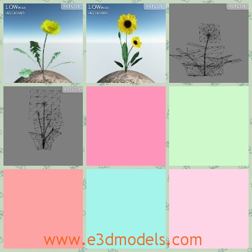 3d model the yellow flower - This is a 3d model of the yellow flower in the garden,which is common to see everywhere.The model is the indispensable plant in the games.