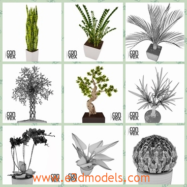 3d models of many potted plants - These models are about some green plants growing small flower pots. These models are compatible with 3ds max 2008 or higher.