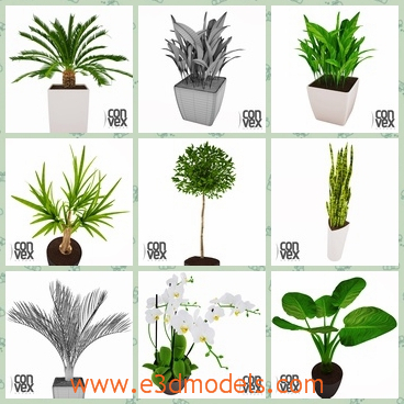 3d models of many potted plants - These are highly detailed 3d models of potted plants which are useful to decorate the interior as well as to create a fancy garden.