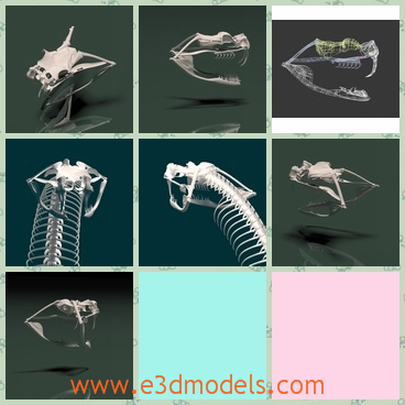 3d model the bone of the snake - This is a 3d model of the bone of the snake,which is scary and linked with one another.