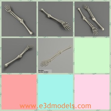 3d model the skeleton arm - This is a 3d model of the skeleton arm,which is the human arm.The model can be be added more details according to your projects.