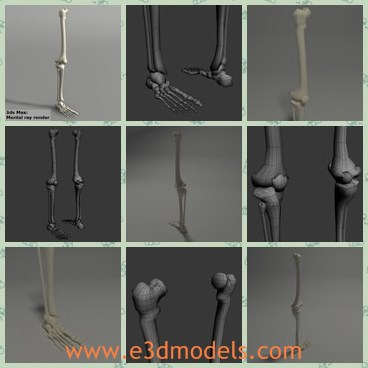 3d model the skeleton leg - This is a 3d model of the skeleton leg,which is long and is the leg of human beings.The model is  made to add more details to your projects.