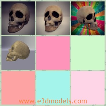 3d model the skull - This is a 3d model of the human skull,which is horrible and made according to the real ones.