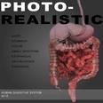 3d model the human internal organs